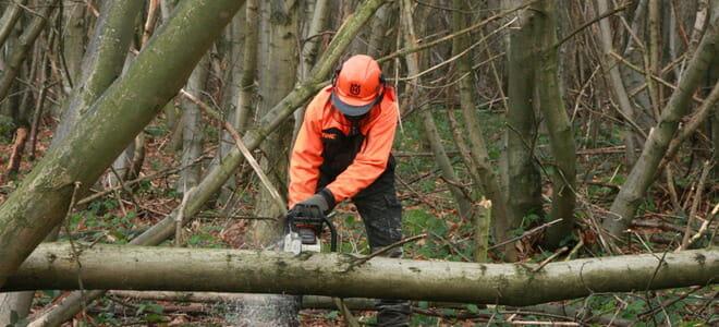 Tree surgery Maidstone, Kent