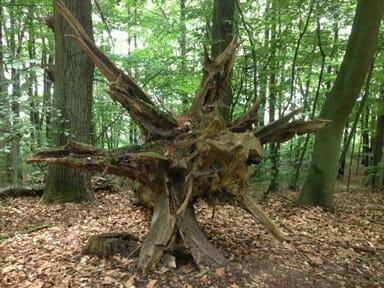 About Tree Pro Kent