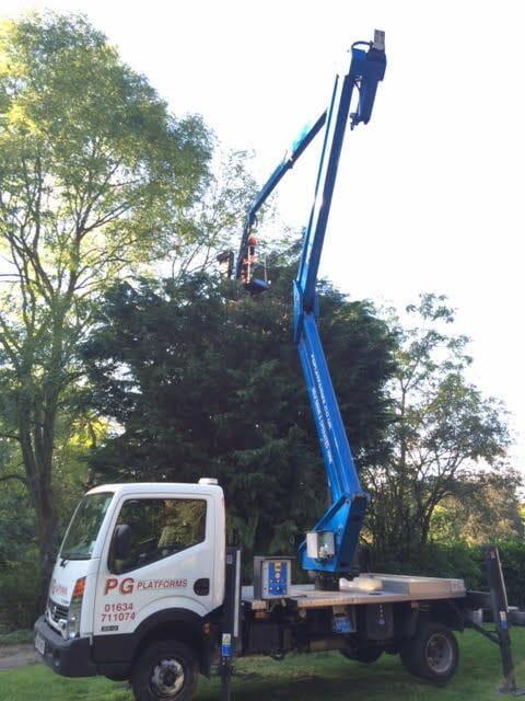 tree-pruning-6
