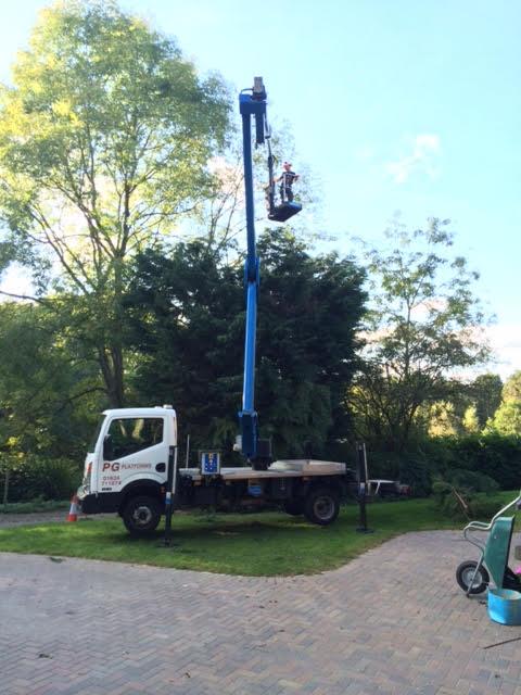 tree-pruning-7