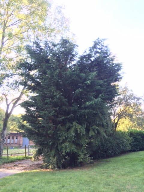 tree-pruning-8