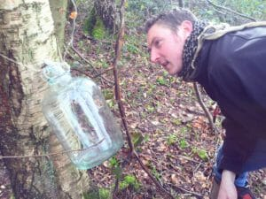 tapping for silver birch water